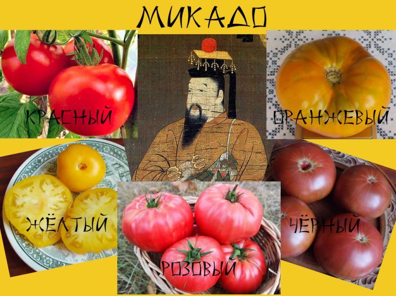 Томаты Микадо: описание императорских сортов