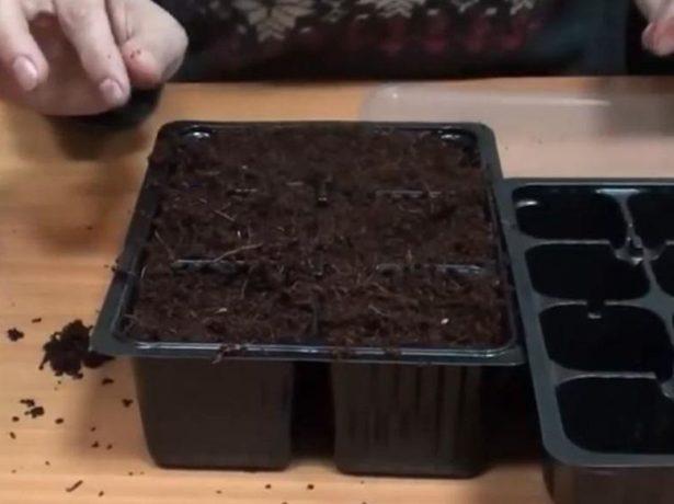 Кассеты с грунтом для выращивания рассады