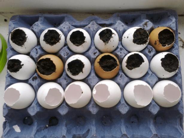 Яичные скорлупки, заполненные почвой