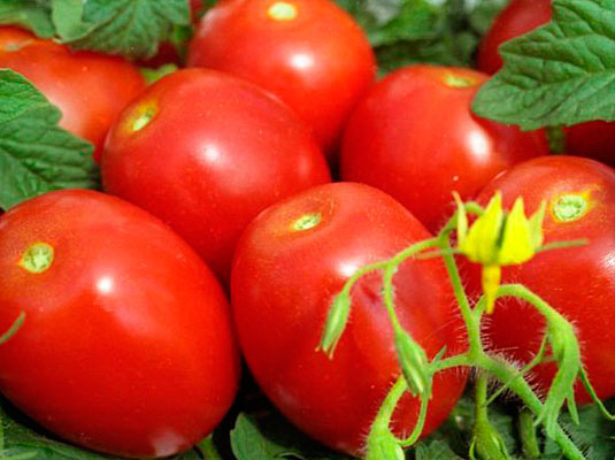 Плоды томата сорта Валентина