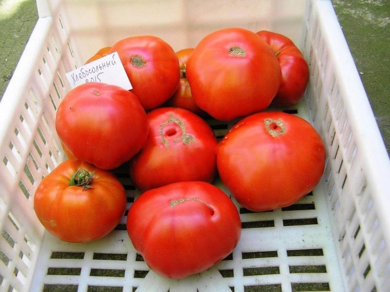 Сорт Хлебосольный — идеальный томат для застолья