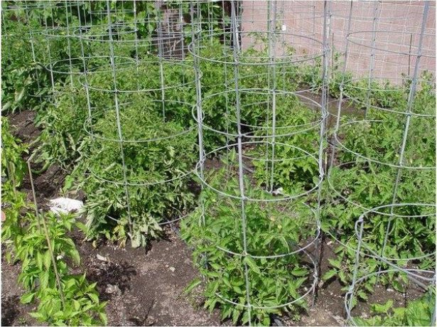 цилиндры для помидоров