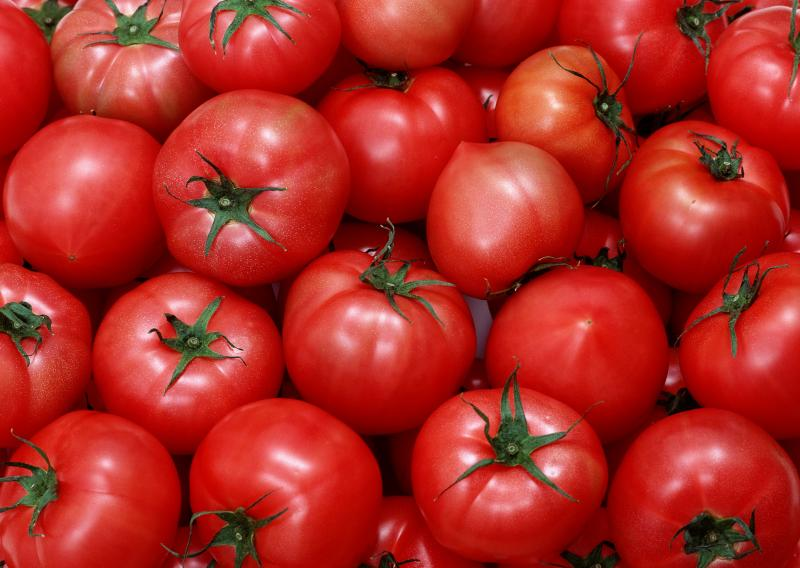 Томат Дебют открывает помидорное лето