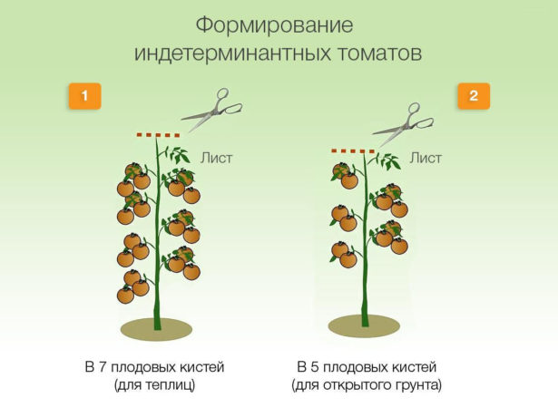 Формирование и прищипывание индетерминантного куста помидоров