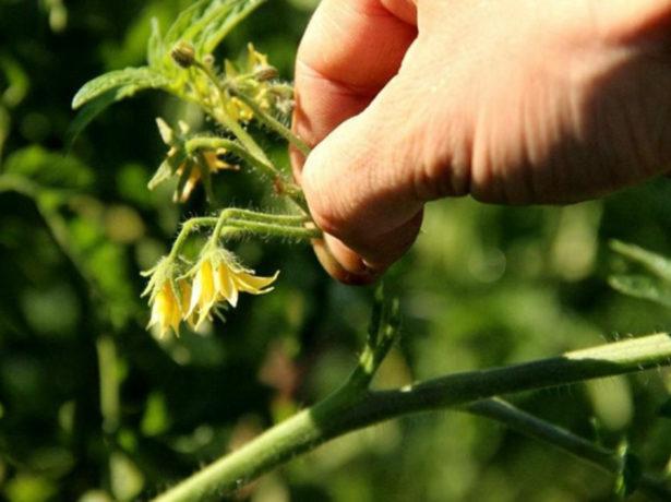 Формирование цветочной кисти