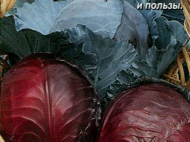 Семена капусты Фаберже