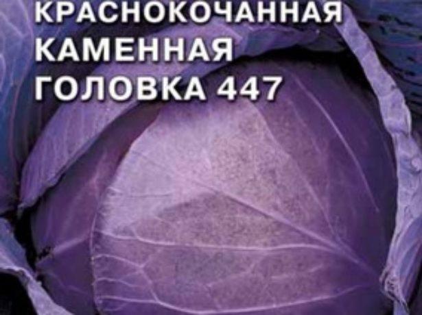 Капуста Каменная головка