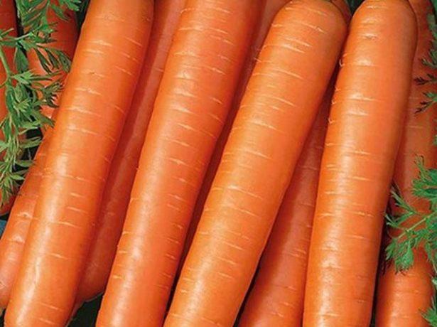 Семена моркови Тушон от агрофирмы «Поиск»