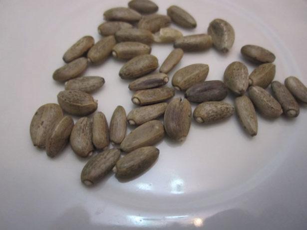Семена артишоков