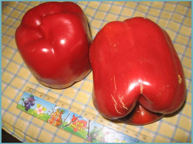 Плоды перца Геракл