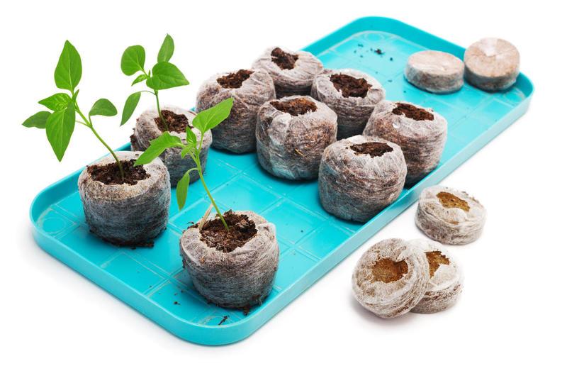 Рассада перцев в торфяных таблетках — Зеленый мир