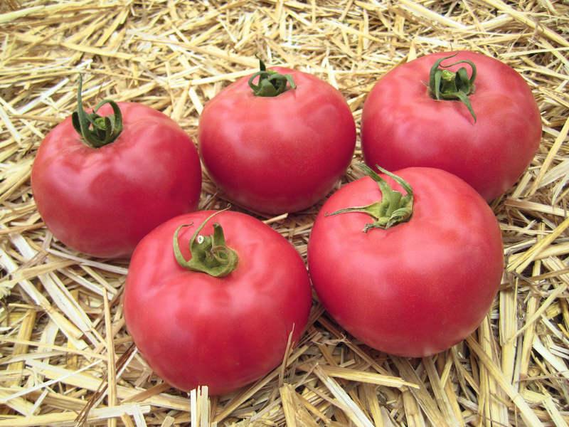 Томат Розовый сувенир: прекрасный жаростойкий сорт