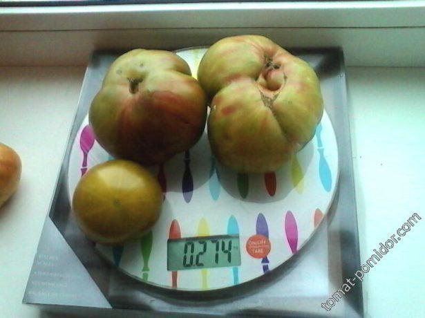 Плоды томата Чёрный ананас на весах