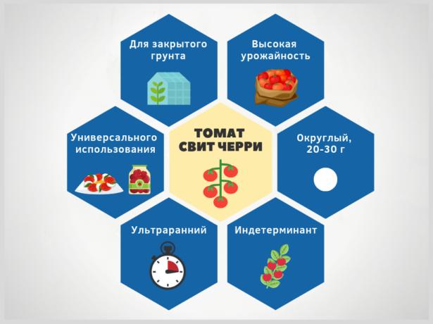 Инфографика Свит черри
