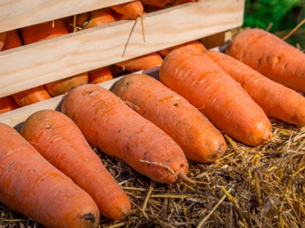 Морковь для длительного хранения