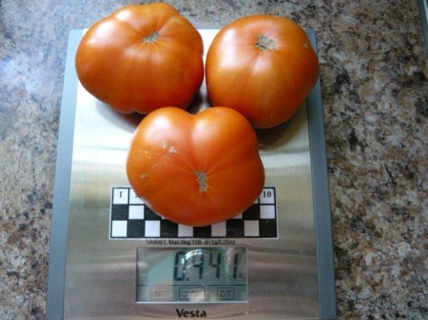 Плоды сорта томата Вспышка