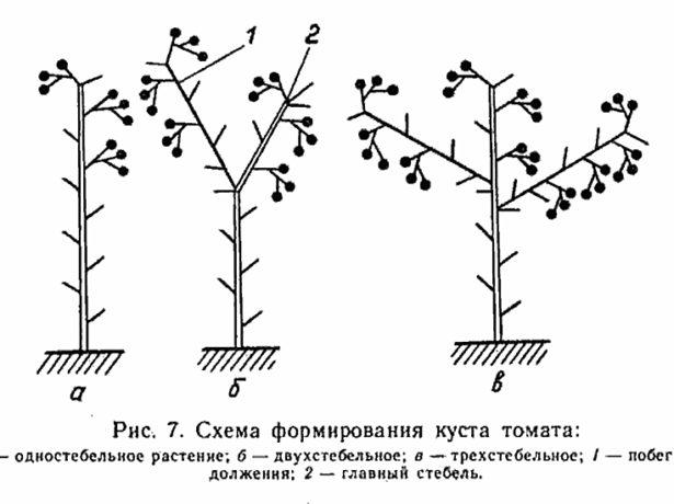 Схемы формирования кустов томатов