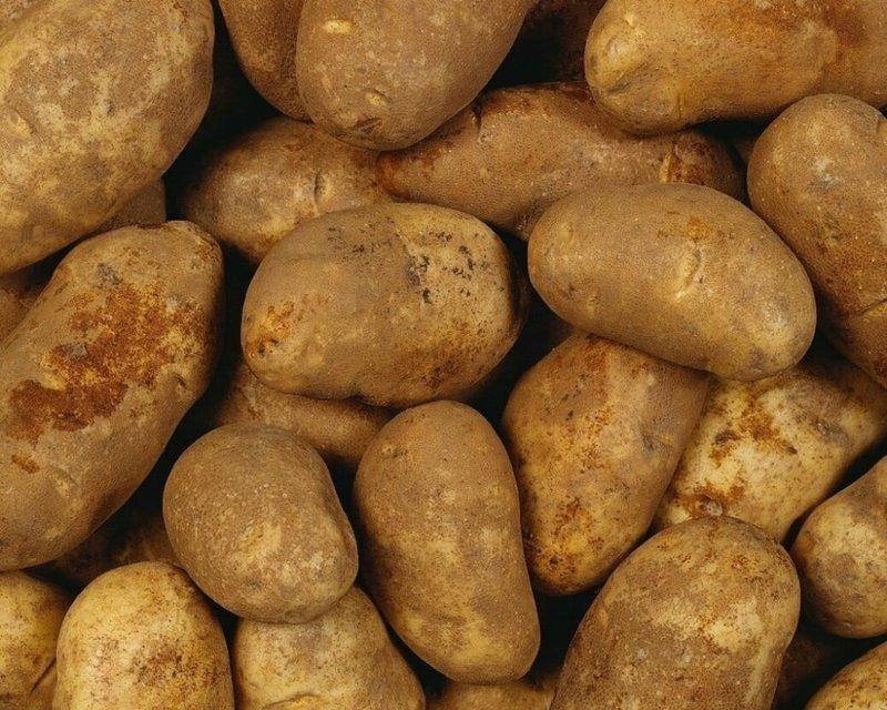 Картофель Бриз —белорусский сорт для профи