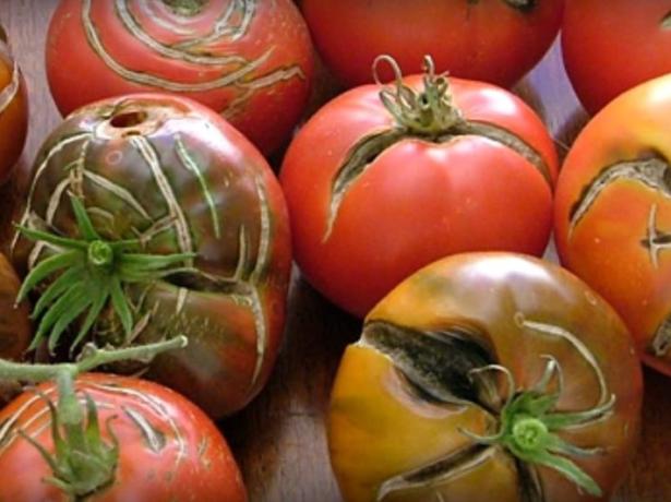 Треснувшие томаты
