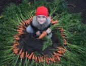 мальчик и урожай моркови