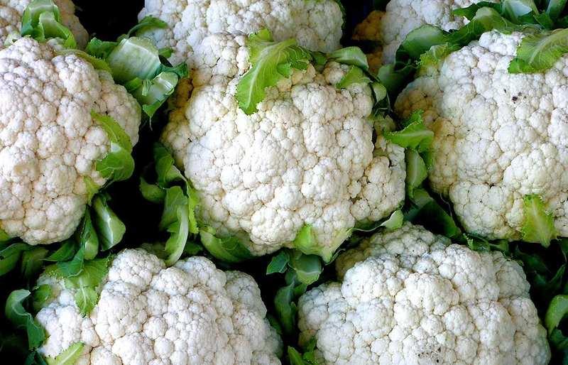 Цветная капуста Альфа — описание раннего, урожайного и вкусного сорта