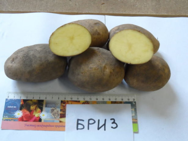 Клубни картофеля Бриз