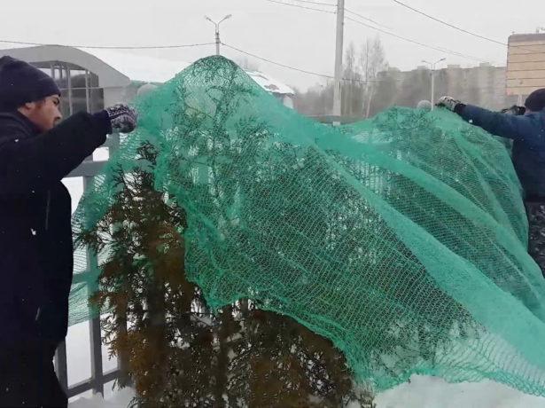 Притенение хвойных деревьев затеняющей сеткой