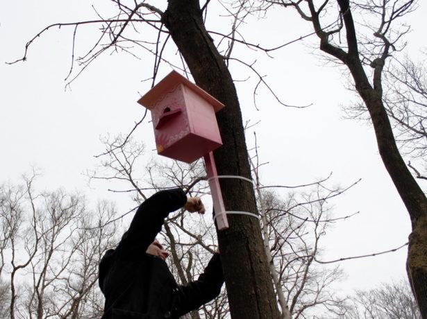 Мужчина крепит скворечник к дереву
