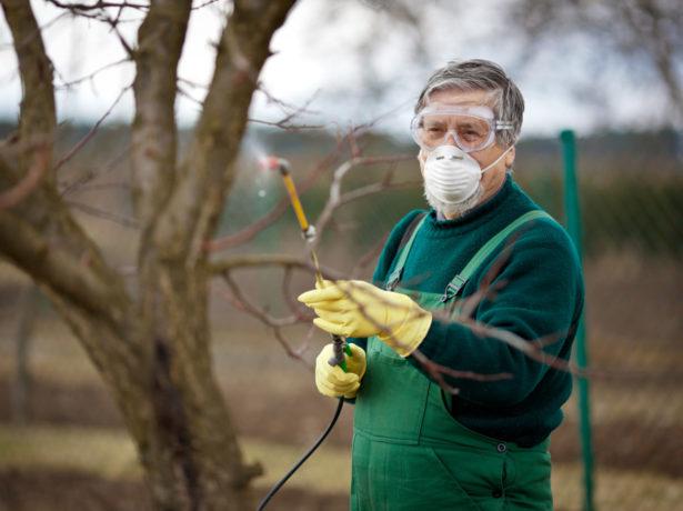 Химическая обработка сада при помощи опрыскивателя