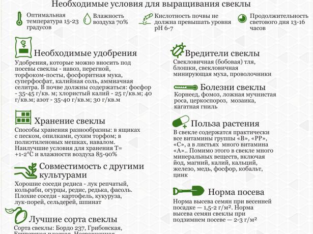 Основные принципы выращивания свёклы