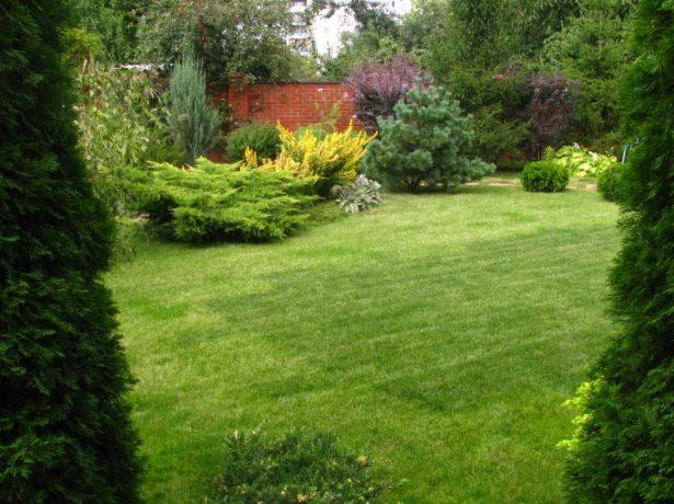 Можжевельники в ландшафте сада