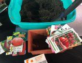 сеем томаты
