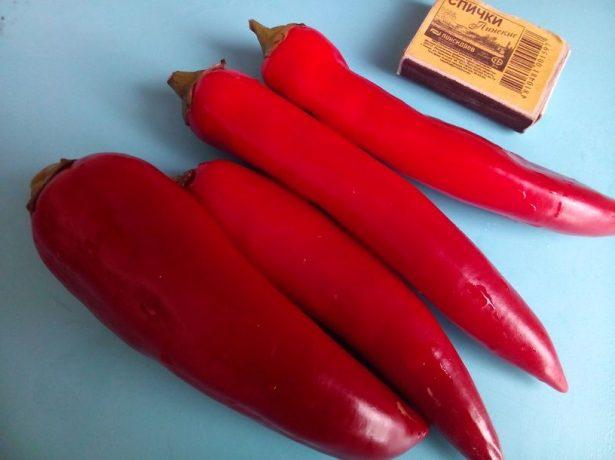 Перец Красный толстяк