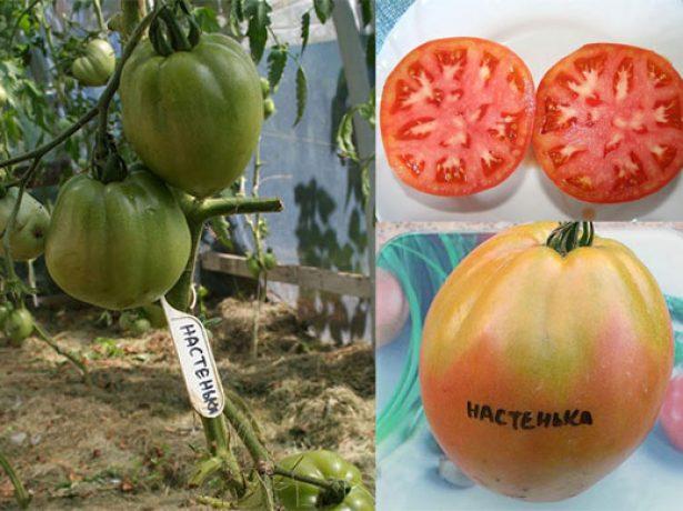 Плоды томатов Настенька