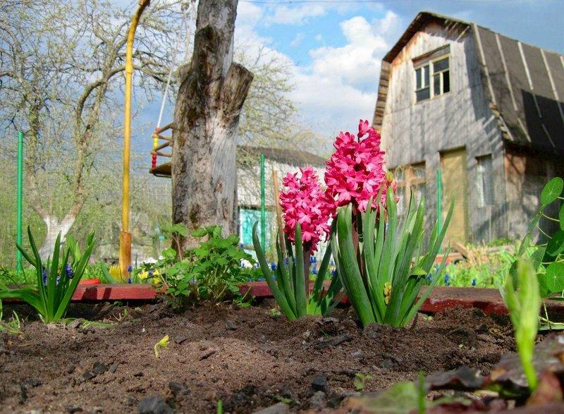Новый дачный сезон начинаем с чистого дома