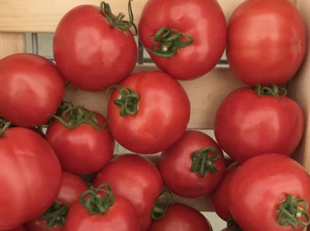 Плоды томата Султан F1