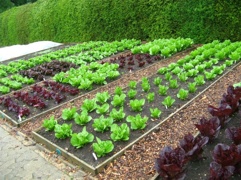 Как правильно сделать грядки: 2 реальных плана огорода на участке