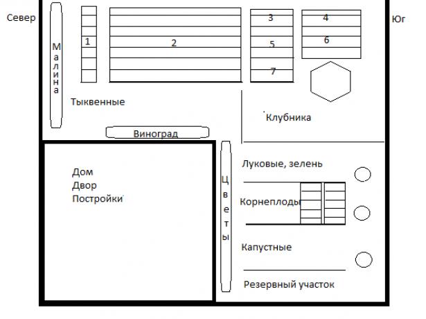 Схема размещения культур на огороде