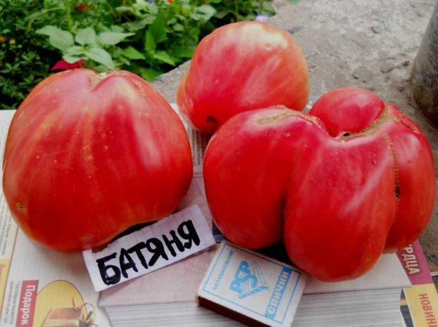 Плоды томата Батяня