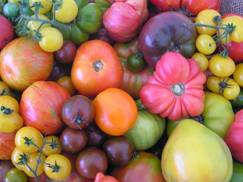 Самые необычные помидоры: подборка с фото экзотических сортов томатов разной формы и окраски