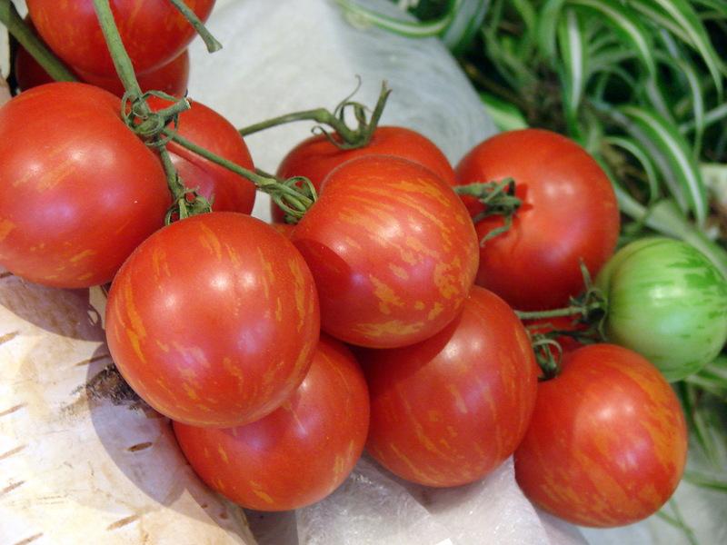 статистика полосатые томаты сорта фото роль мирового