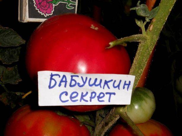 Плоды томата Бабушкин секрет