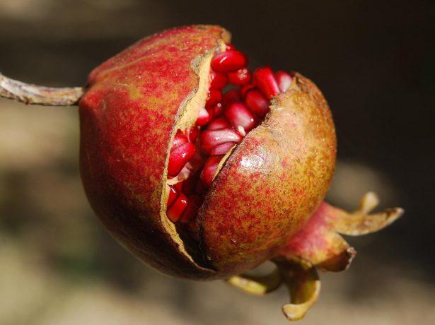 Треснувший плод граната