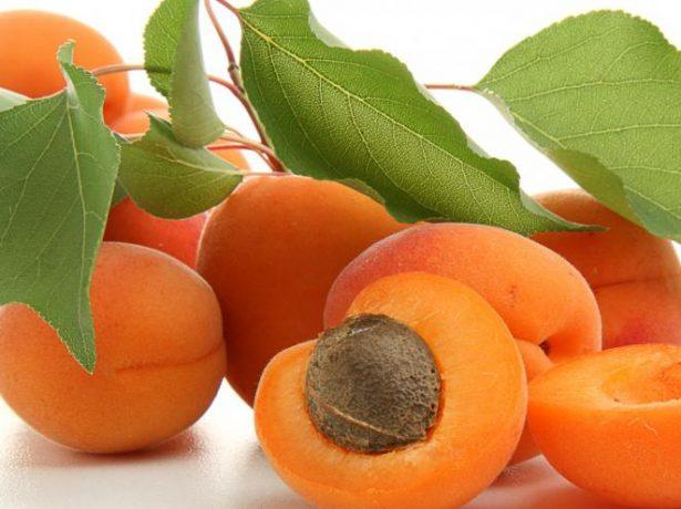 Плоды абрикоса Триумф Северный