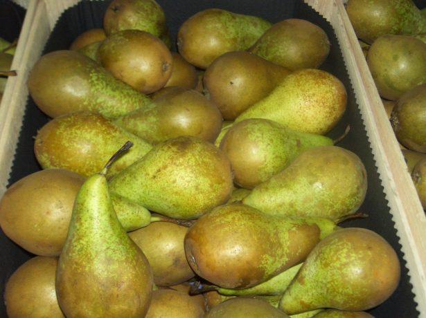 Плоды груши Конференция в ящике