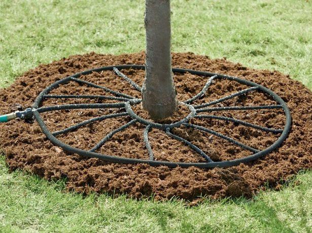 Система капельного полива дерева
