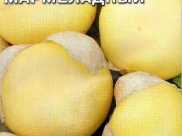 Сорт физалиса Мармеладный с кремовыми ягодами