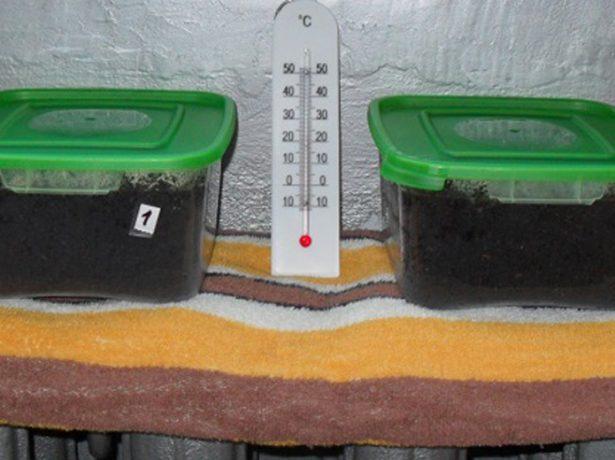 Ёмкости с семенами на батарее отопления