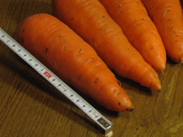Морковь сорта Абако