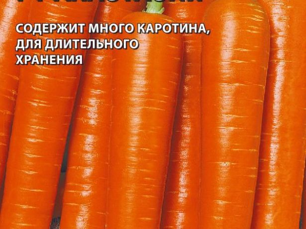 Морковь Анастасия